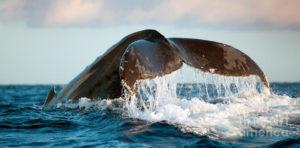 Encuentro con ballenas y recomendaciones a seguir