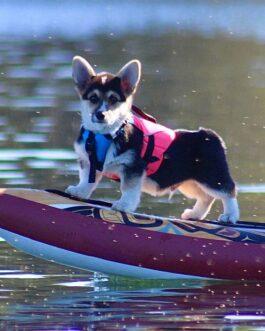 Salvavidas para perros Pup Float
