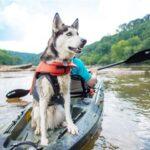 ¿Cómo salir en kayak con su perro?